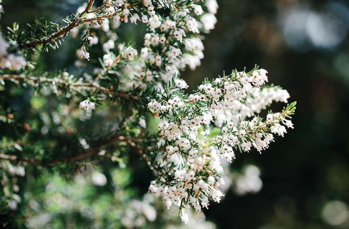 ❥ Casi primavera