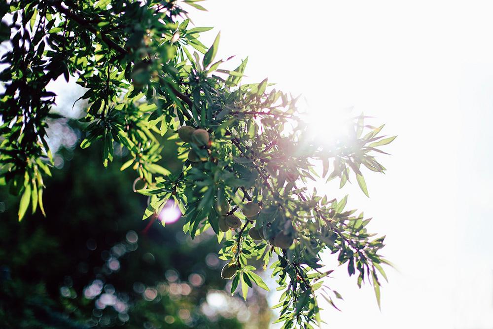 ❥ Y el sol amordiscos.