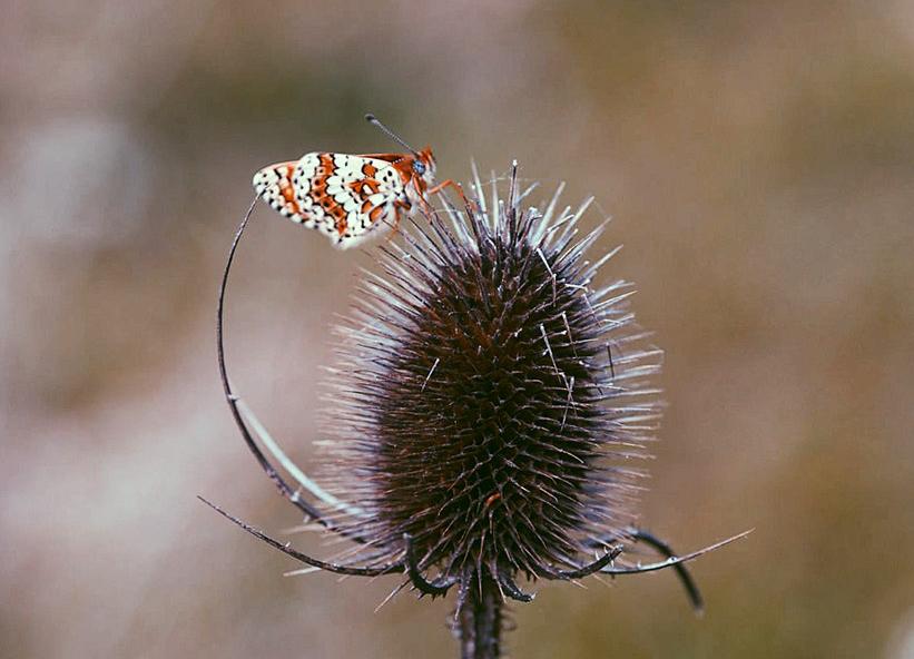 ❥ Butterfly