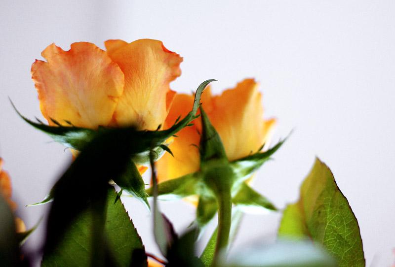 ❥ Marzo sigue regalándomeflores…