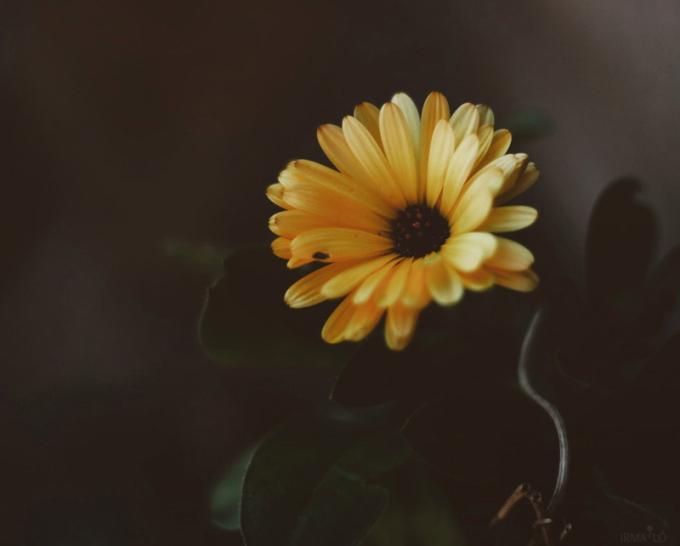 ❥ Flores deinvierno